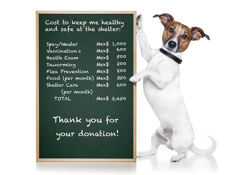 Cost to Adopt Dog.jpg