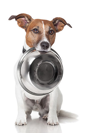 DP Dog with Bowl Begging small.jpg