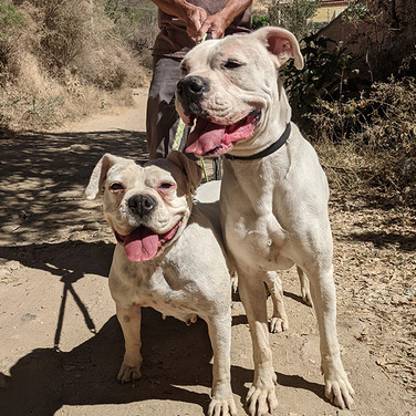 Samson and Delilah (Pending Adoption)