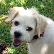 Finley (Pending Adoption)
