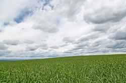 grass sky_BB_4185