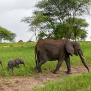 elephant twins