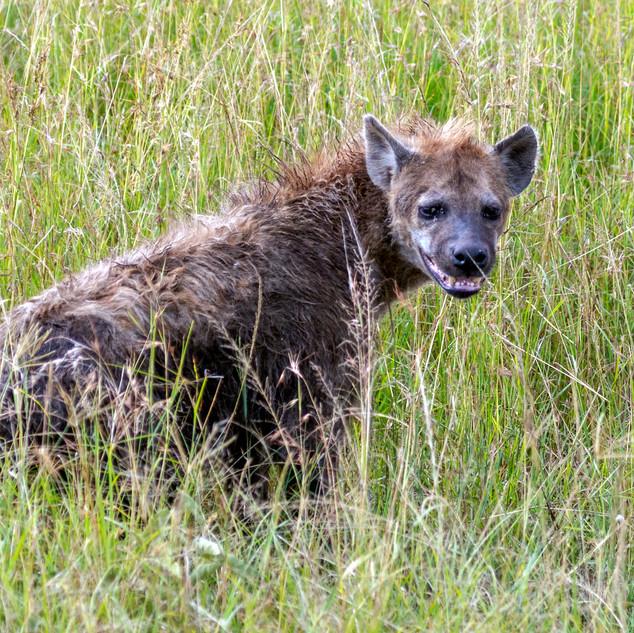 hyena smile