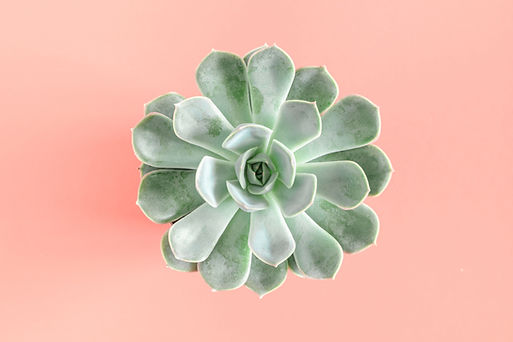 Green succulent plants pattern on pastel