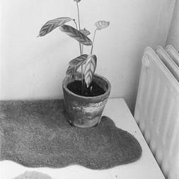handtufted carpet  for a planter  2020