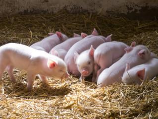 Pigout Pizza: Pig Farmer Extraordinaire