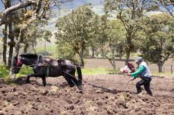 Preparando la tierra para el cultivo
