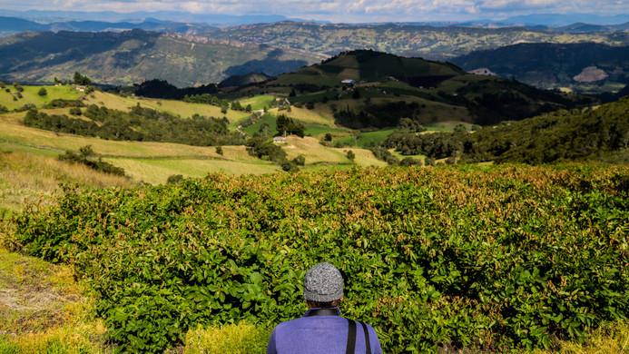 Cultivo de papa desde los 3300 msnm Tausa