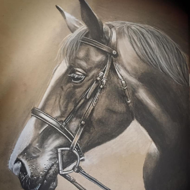"""""""After,"""" the horse"""