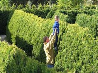 Image Of Man With Child Trying To Cheat In A Hedge Maze