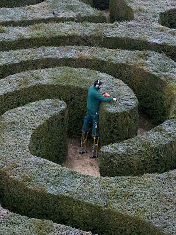 Image Of A Man On Stilts Trimming A Hedge Maze