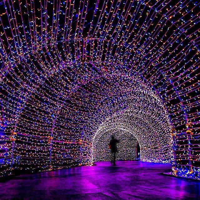 Tunnels Of Christmas Tree Lights