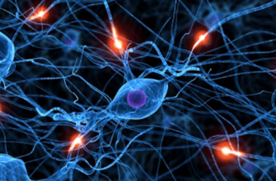 Image Of Brain Cell Neuropathways