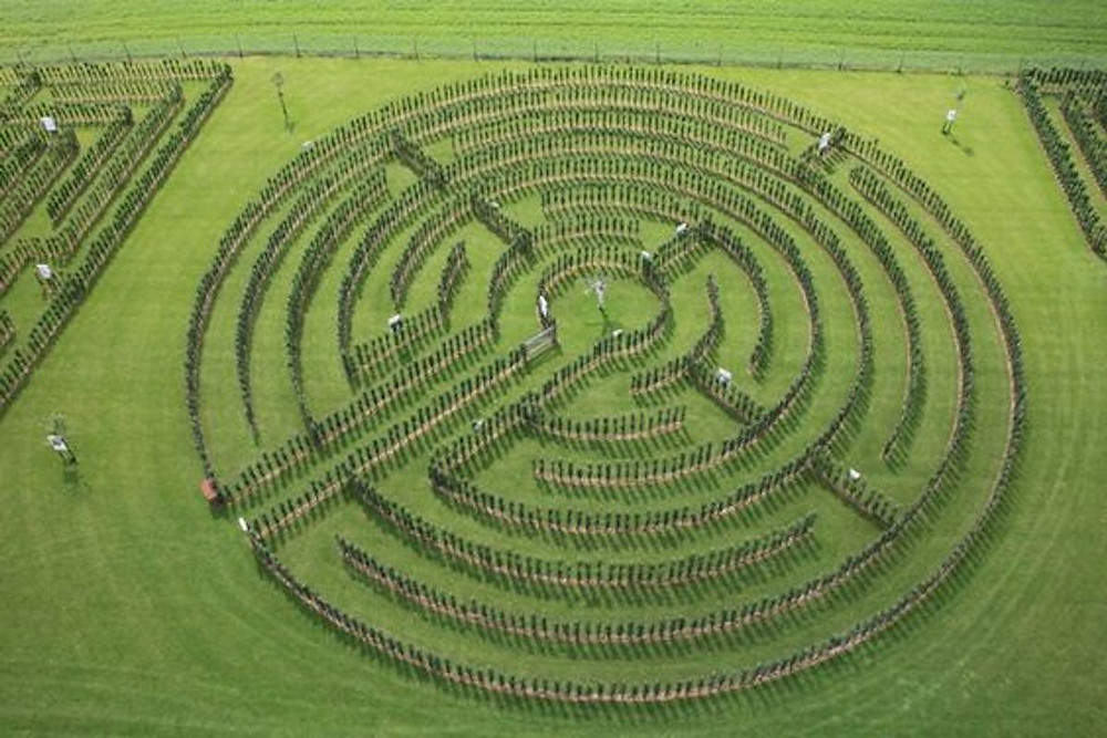 Image Of A Labyrinth Made Out Of Apple Trees
