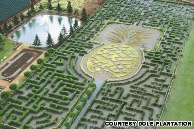 Image Of Dole Plantation Pineapple Maze