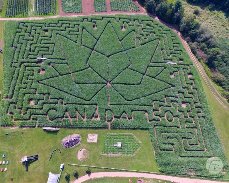 Image Of A Corn Maze Saluting Canada