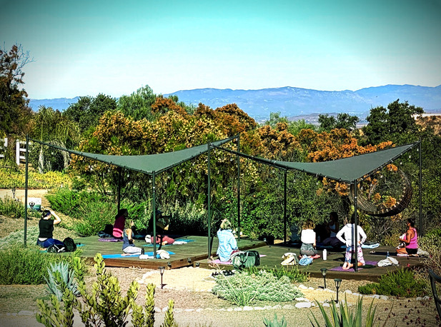Yoga In Nature with Lorrie Shepard
