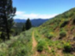 Wildflowers on an ATV trail.