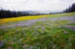 Spectacular Idaho springtime wildflowers.