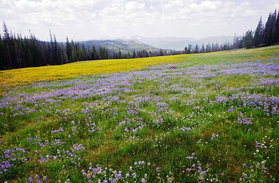 Spectacular Idaho springtime wildflowers.