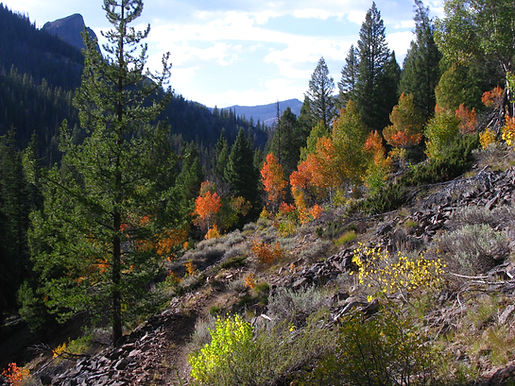 Beautiful fall colors at Yankee Fork, Idaho