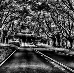 Spooky Trees.
