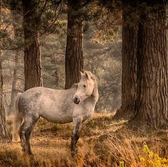 Fir Tree Shades of Grey.