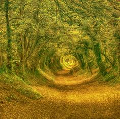 Hobbit Heaven.