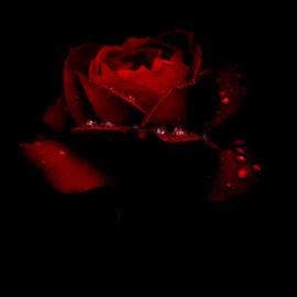 Crimson Rain.