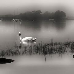 Misty Calm.