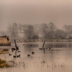 Bosham Mist.