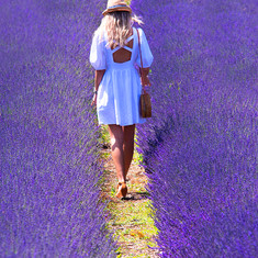 Beauty of Lavender.