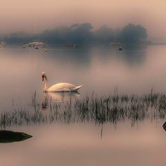 Peace & Reflection.