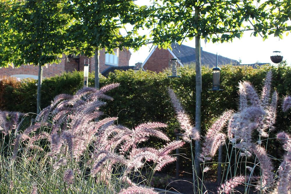 grass garden ornamental envisage gardens