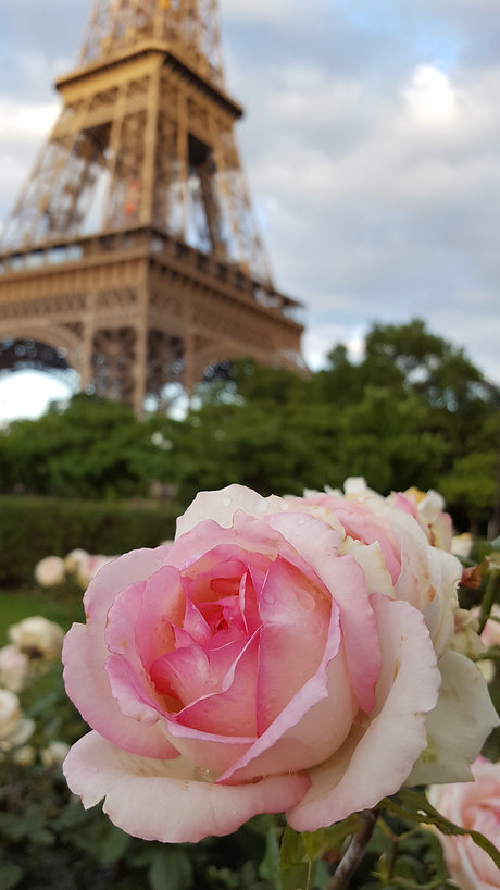 Eiffel Tower with rose.jpg