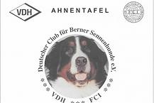 Berner Sennenhund, Adele