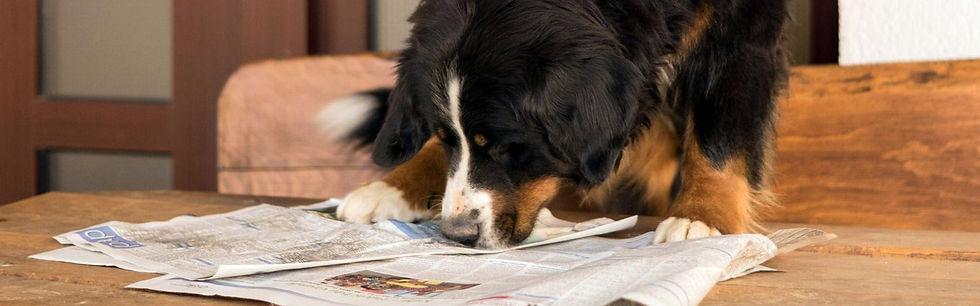 Berner Sennenhund Neuigkeiten