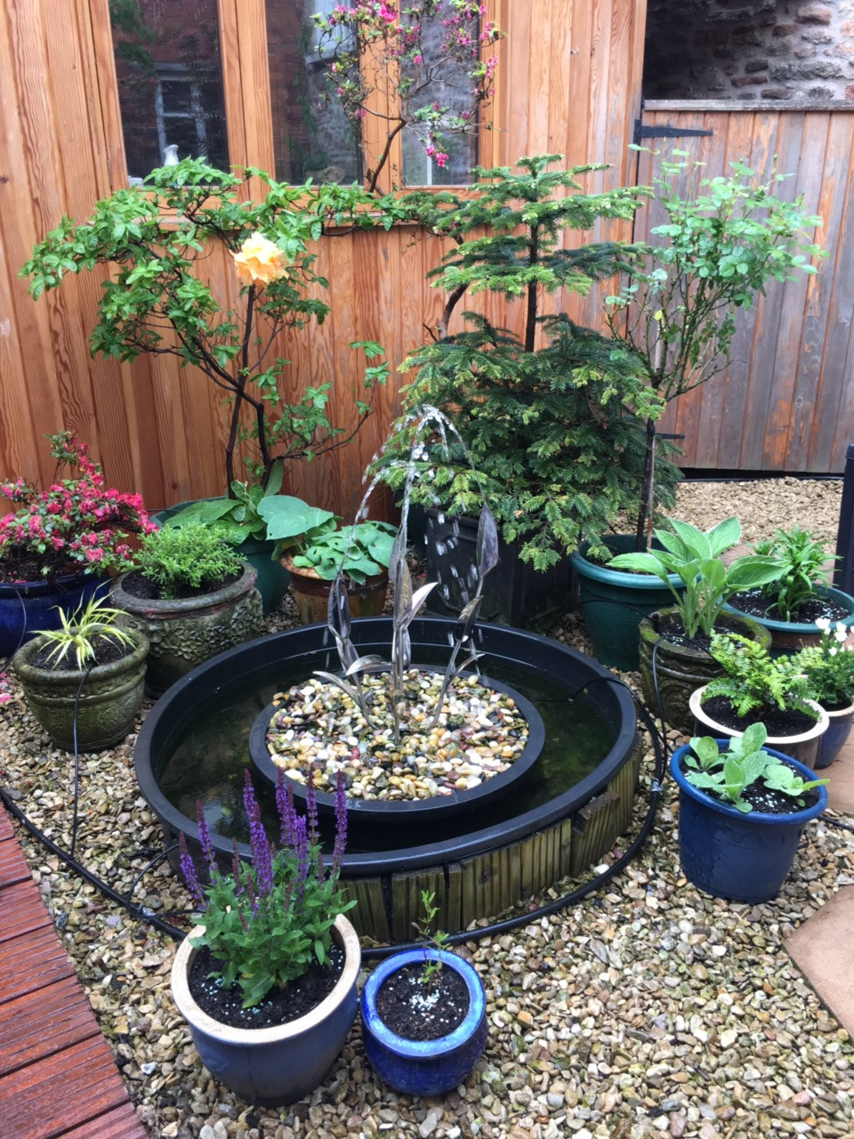Potted plants at Rock House Dental Practice