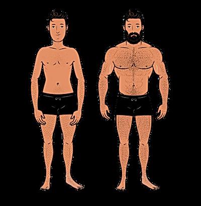 masculine-versus-feminine-bodies-illustr