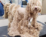 Matted coat on dog image.jpg
