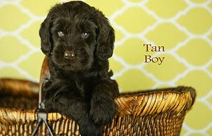 tan boy
