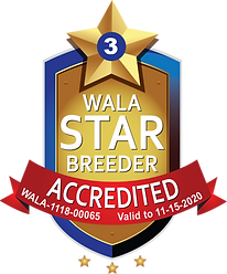 Sunrise WALA Star Logo--1118-00065.png