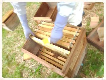 第1回ハチミツ採取の日!