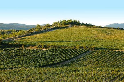 terroir cazelles vins minervois roc de bo