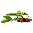 Jojoba%20Oil%20Seed%201_edited.png