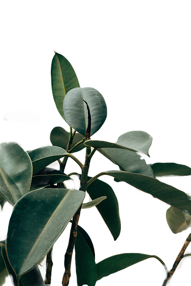 green-leafed-indoor-plant-1048035_edited