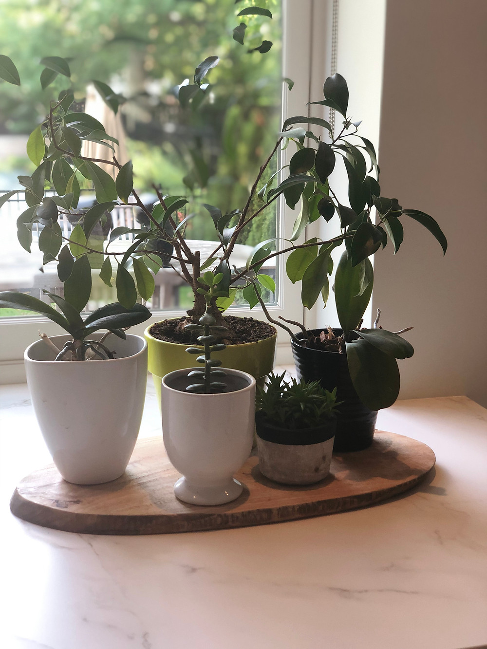 Grouped potted plants in kitchen window