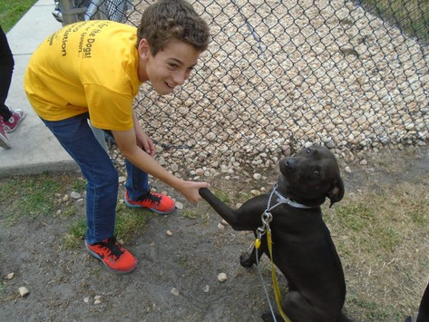 Canine Commandos: Meet the Founder!