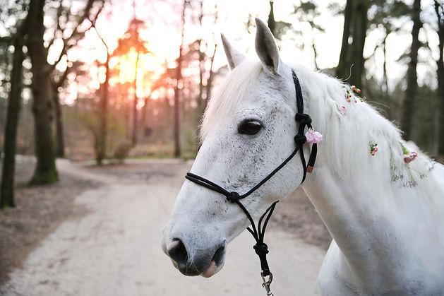 Wit paard - Forever Yes Photography - Bohemian Styled Shoot Cornee & Mieke - Eline van der Woude