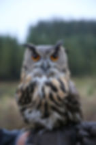 Forever Yes Photography - Bohemian styled wedding-shoot Ardennen, Belgium België Valkerij/Fauconnerie Falcon's Residence Ivan de Gier Sebastiaan Poelen Maaike Poelen Kimberley Meewis Make-up & More